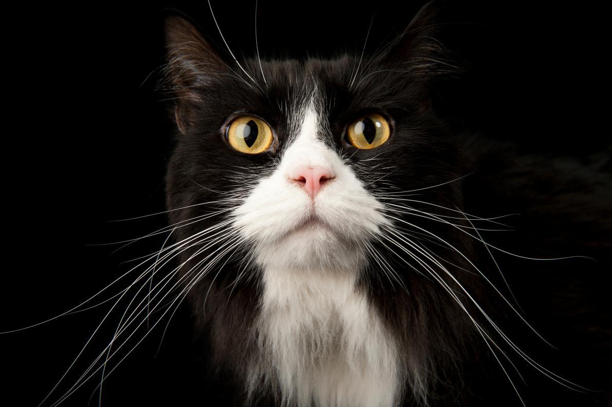 6a7ef3884433 Τι σημαίνει όταν η γάτα κουνάει την ουρά της   ΒΙΝΤΕΟ