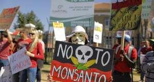 Γαλλία: Απαγορεύεται με νόμο ο σπόρος της Monsanto