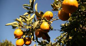 Τι κρύβεται πίσω από τη βιομηχανία «Χυμός Πορτοκάλι»