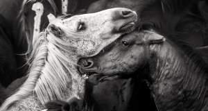 National Geographic: 15 υπέροχες φωτογραφίες αποτυπώνουν την... ποίηση της φύσης