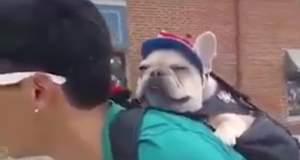 Πάρτε το σκύλο σας μαζί σε ό,τι και αν κάνετε! [ΒΙΝΤΕΟ]