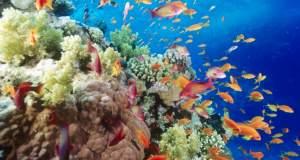 Η Μεσόγειος χάνει τα ψάρια και τα θηλαστικά της