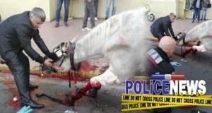 Άλογο τραυματίστηκε μετά από σύγκρουση με ταξί στο κέντρο της Αθήνας [ΦΩΤΟ]
