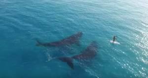 Αυστραλία: Κάνοντας κανό με τις φάλαινες! [ΒΙΝΤΕΟ]