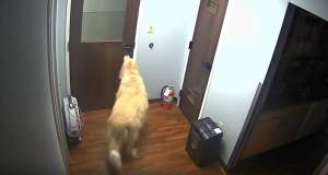 Τίποτα δεν σταματά τον «Στρατηγό»: Σκύλος δραπετεύει από νοσοκομείο ζώων [ΒΙΝΤΕΟ]