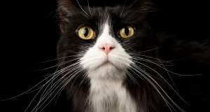 Τι σημαίνει όταν η γάτα κουνάει την ουρά της; [ΒΙΝΤΕΟ]