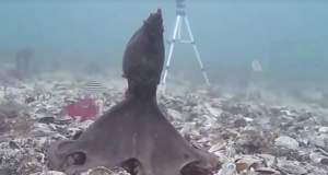 Οκτώ λόγοι που τα χταπόδια κυβερνούν τους ωκεανούς [ΒΙΝΤΕΟ]