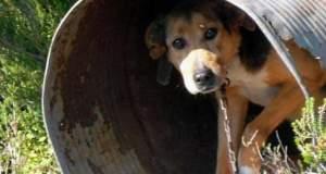 Σώστε τα «βαρελόσκυλα» [ΒΙΝΤΕΟ]