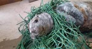 Ψαράς σώζει φώκια εγκλωβισμένη σε δίχτυα [ΒΙΝΤΕΟ]