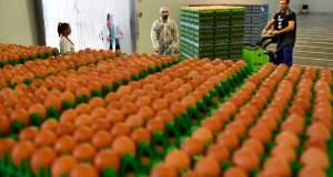 Σκάνδαλο αυγών - και όχι μόνο