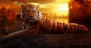 Η έκτη μεγάλη εξαφάνιση των ειδών: Οδεύουμε προς έναν κόσμο χωρίς ζώα