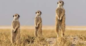 Δέκα φωτογραφίες ζώων στην άγρια φύση