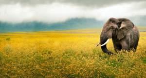 Ποια ζώα κινδυνεύουν περισσότερο με εξαφάνιση;