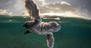 National Geographic: Αφιέρωμα για τη μέρα των ζώων [ΦΩΤΟ]
