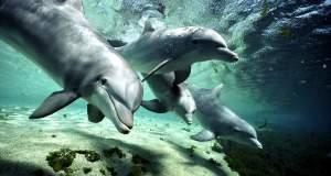 Τα ανθρώπινα χαρακτηριστικά των δελφινιών και των φαλαινών