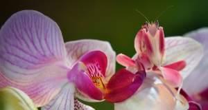 Έντομο ή λουλούδι; [ΒΙΝΤΕΟ]