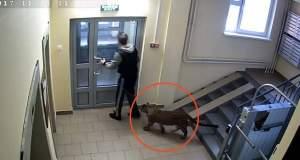Βγάζει για βόλτα τη λεοπάρδαλη με λουρί [Βίντεο]