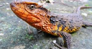 115 νέα είδη ανακάλυψαν οι επιστήμονες στην Καμπότζη
