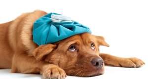 Πώς θα προστατεύσετε το σκύλο σας από τον ιό της γρίπης;