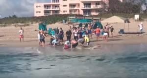 Ψαράδες έβγαλαν καρχαρία στην ακτή [ΒΙΝΤΕΟ]