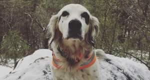 Σκύλος - ήρωας θυσιάζεται σώζοντας το αφεντικό του από αρκούδα