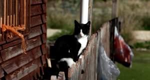 Τάιζε γάτες και της έδωσαν πρόστιμο 1.800 ευρώ!