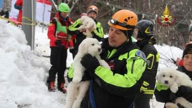 ΒΙΝΤΕΟ: Έβγαλαν ζωντανά από το ξενοδοχείο 3 κουταβάκια 5 ημέρες μετά τη χιονοστιβάδα