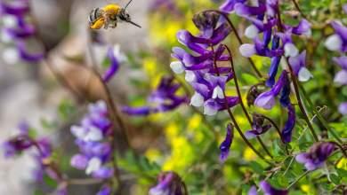 Χαλίλ Γκιμπράν: Tα λουλούδια χαμογελούν μόνο όταν έρθει η αυγή