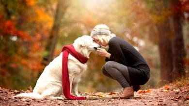 Φιλία σκύλων και ανθρώπων: Είναι θέμα γονιδιακό