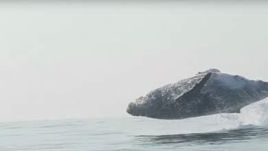 Σπάνια λήψη άλματος φάλαινας δεκάδων τόνων στο φυσικό της περιβάλλον [Βίντεο]