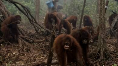 Φοινικέλαιο: Το μεγάλο πλιάτσικο στα δάση της Ινδονησίας