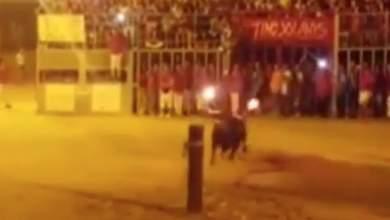 Η αυτοκτονία του ταύρου [Βίντεο]
