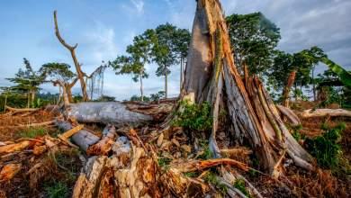 Πώς η «λευκή» βιομηχανία της σοκολάτας καταστρέφει τα δάση της Αφρικής