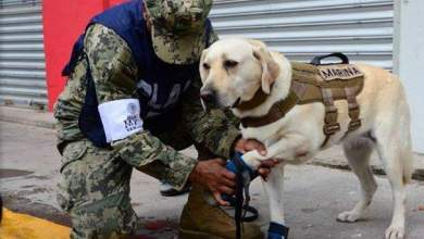 Φρίντα: Η ηρωική σκυλίτσα του Μεξικό [ΦΩΤΟ+ΒΙΝΤΕΟ]