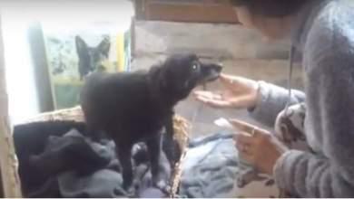 Ηλικιωμένη αρνείται να μπει σε γηροκομείο και να αφήσει τον 22χρονο σκύλο της