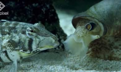 Σαλιγκάρι - «δολοφόνος» επί το «έργον» [Βίντεο]