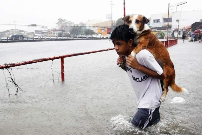 Άνθρωποι που ξεπέρασαν τον εαυτό τους για να σώσουν ζώα [Βίντεο]