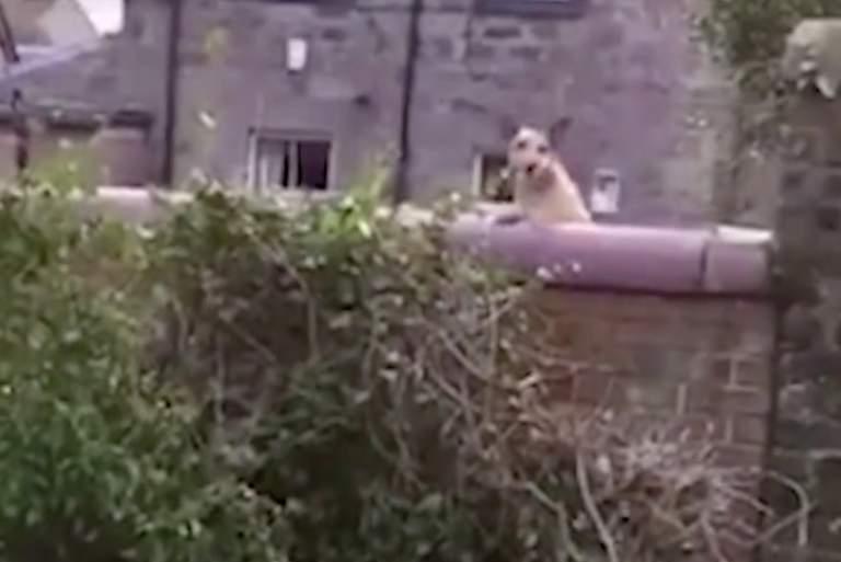 Αυτός είναι ο πιο περίεργος σκύλος του κόσμου! [ΒΙΝΤΕΟ]