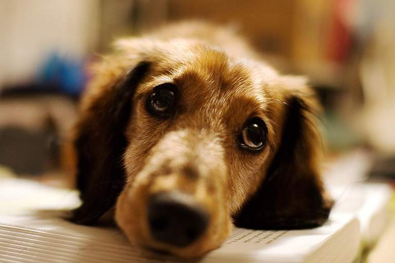 Με αυτόν τον τρόπο σας ζητάει συγγνώμη ένας σκύλος
