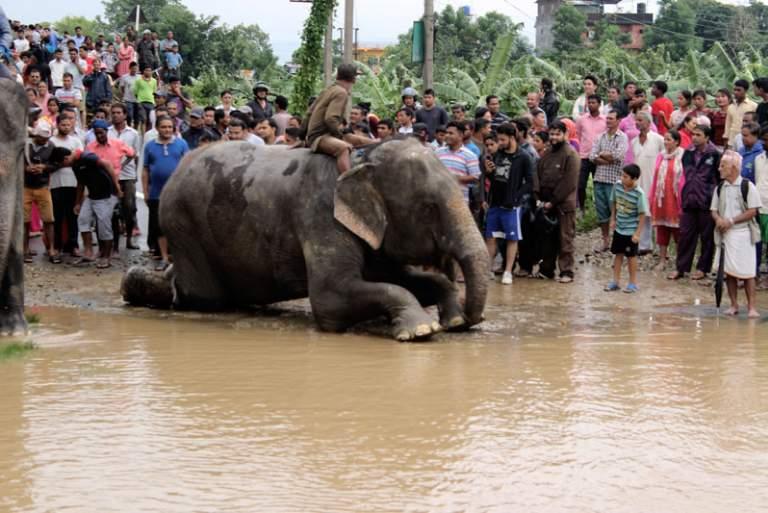 Ελέφαντες σώζουν 600 άτομα στις πλημμύρες του Νεπάλ [ΒΙΝΤΕΟ]