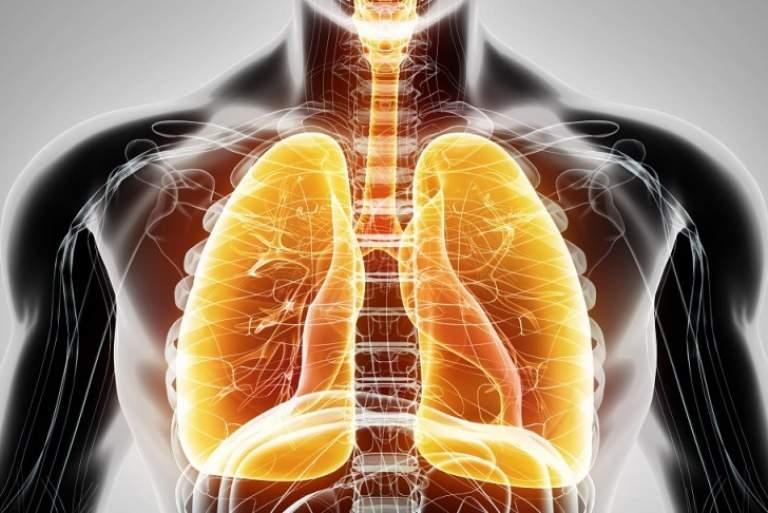 Επιστήμονες αναδημιουργούν πνεύμονα με βλαστοκύτταρα